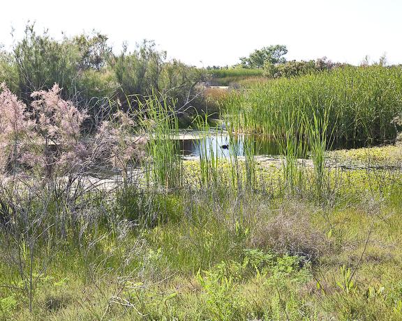 Kern National Wildlife Refuge 1-3868