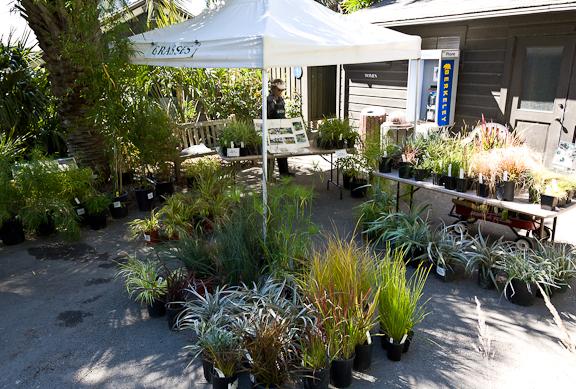 Plant Sale-0285