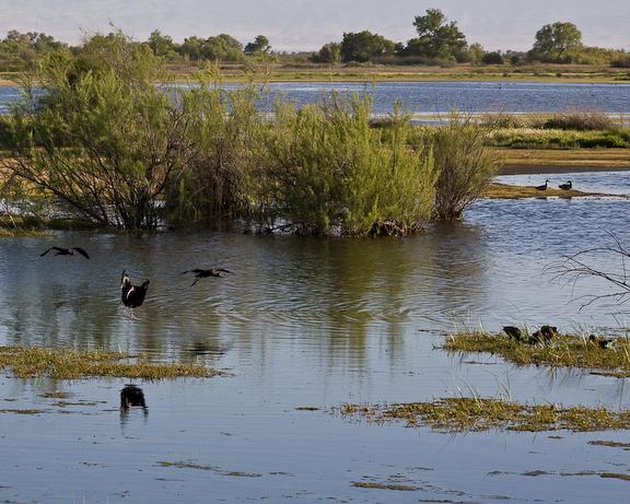 Kern National Wildlife Refuge 2-3906