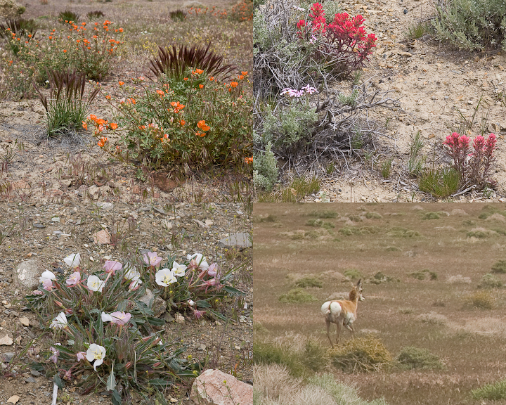 SevenTrough Flowers-4306