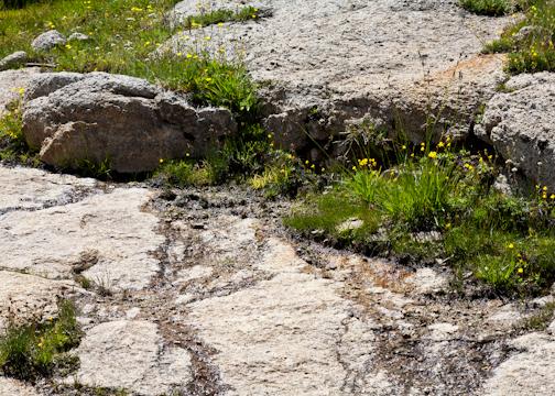 Mono Pass Trail-9422