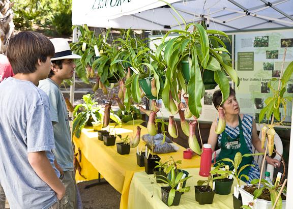 Plant Sale-0291