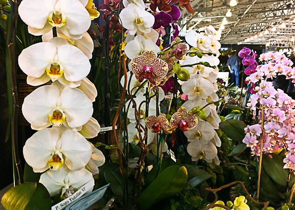 SF Orchid Show-4 (1 of 1)