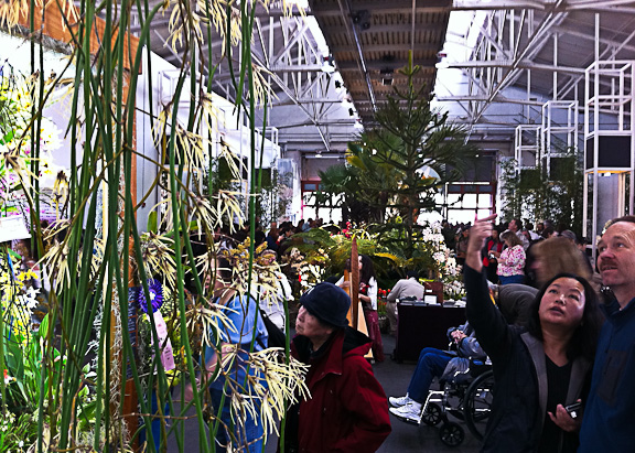 SF Orchid Show-3 (1 of 1)